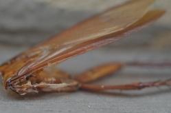 DSC_0391 roach